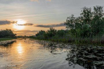 Canal du delta du Danube