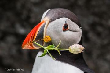 la fleur au bec