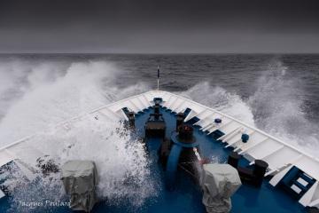 Navigation vers la Terre François Joseph, mer de Barents
